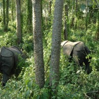 DAY9 Chitwan Elephant Safari11